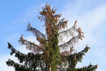 Klettergurt Für Baumfällarbeiten : Baumfällungen u2013 wurzelentfernung kaarst neuss zimmermann garten