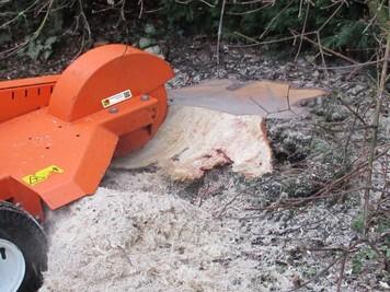 Baumpflege Klettergurt : Baumfällungen u2013 wurzelentfernung kaarst neuss zimmermann garten
