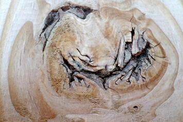 Klettergurt Für Baumfällung : Baumfällungen u2013 wurzelentfernung kaarst neuss zimmermann garten
