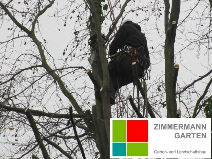 Kletterausrüstung Baumpflege : Baumpflege u baumschnitt kaarst neuss zimmermann garten